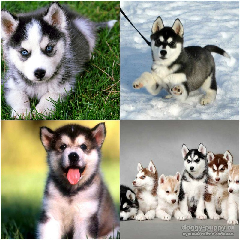 Noble nicknames for girls' dogs  What are the nicknames